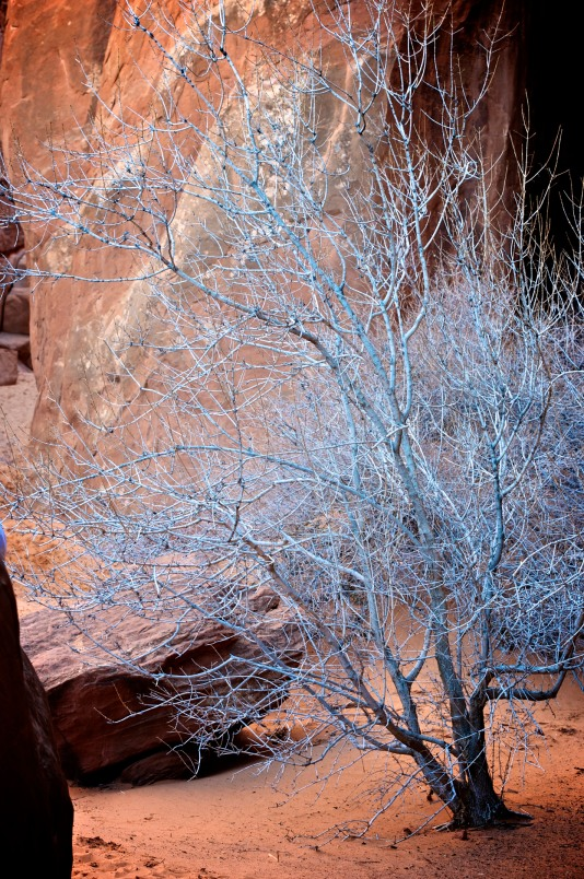 The White Tree