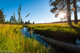 Beautiful Creek in Montana