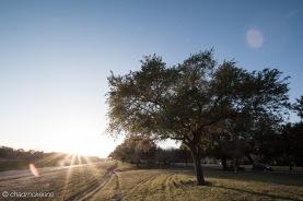 Tree by the Bayou