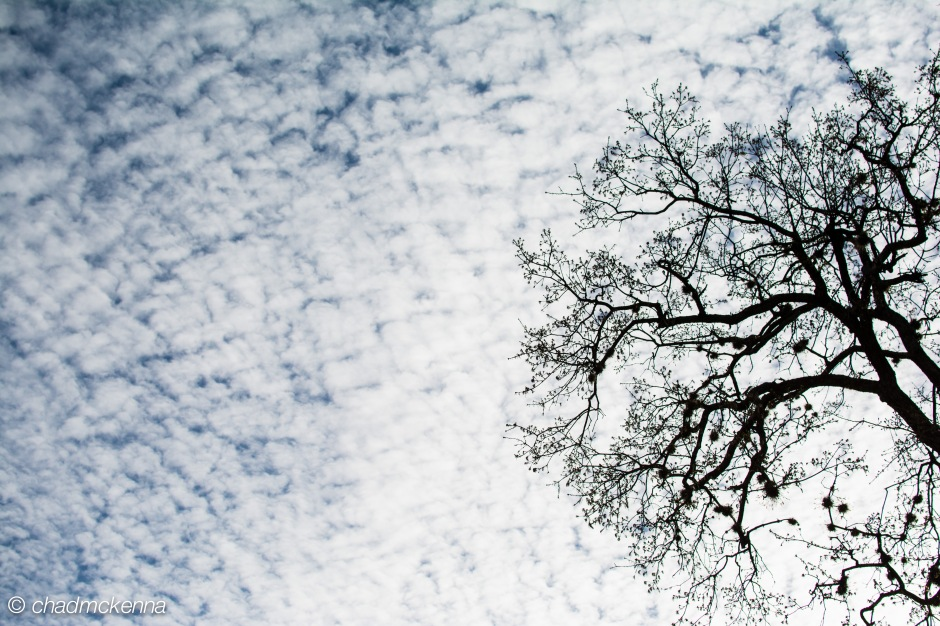 Artsy tree thing