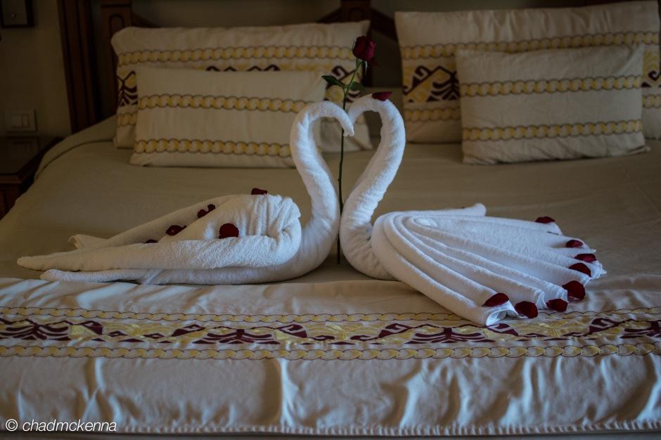 Swan Towels!