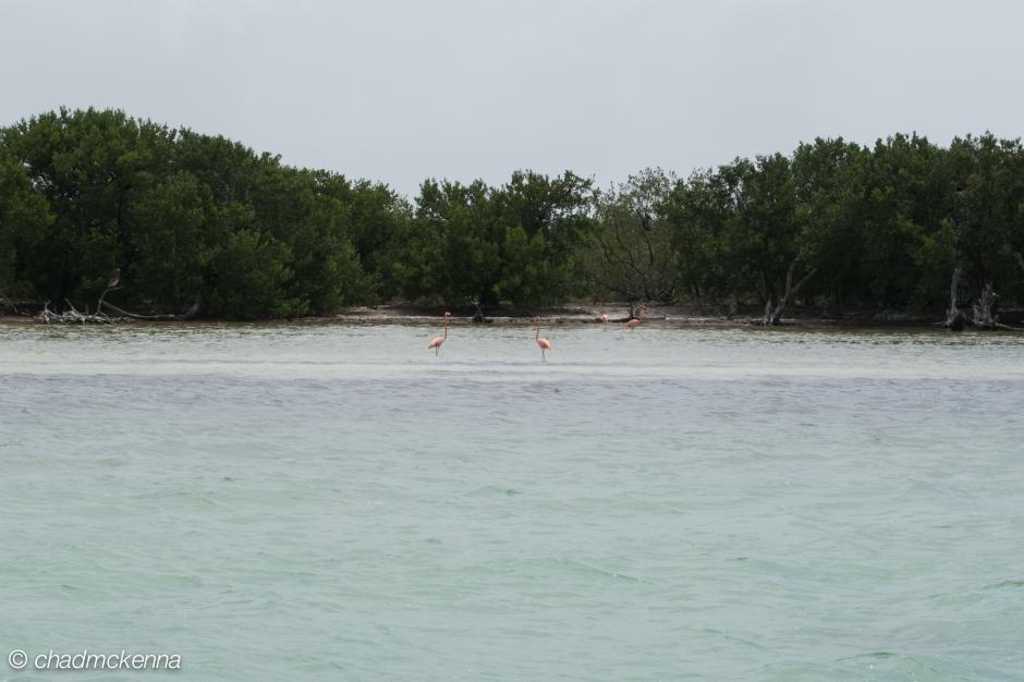 Wild Flamingos!