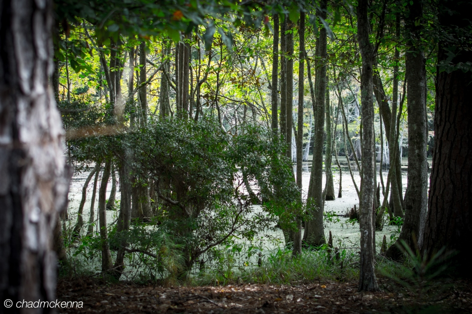 A shot of the swamp